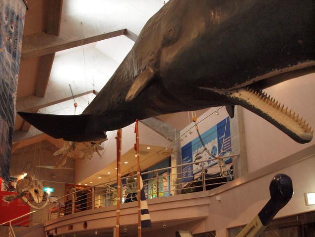 鯨館:写真1