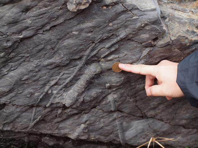 生痕(せいこん)化石:写真2