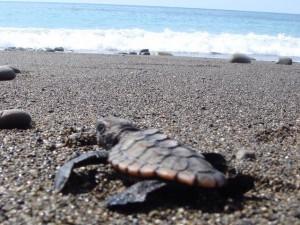 ウミガメ産卵地(奈良師海岸):写真2