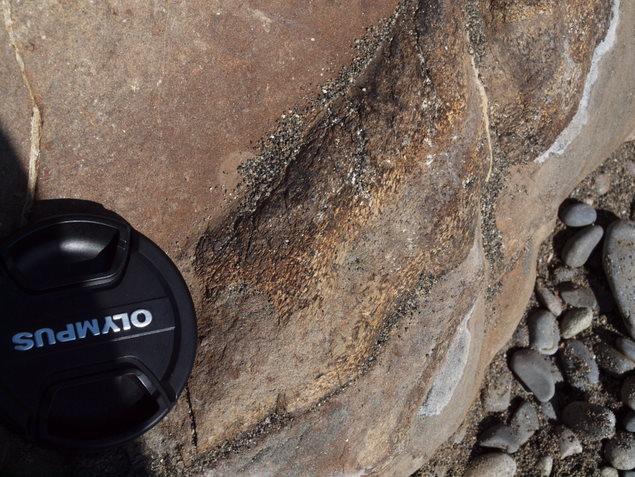 ウミガメ産卵地(元海岸):写真1