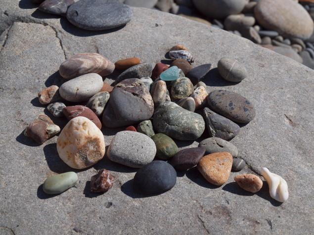 ウミガメ産卵地(元海岸):写真2