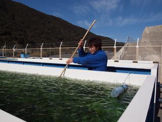 高岡漁港スジアオノリ養殖施設:写真2