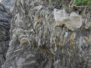 スランプ構造とヤッコカンザシ:写真1
