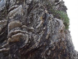 スランプ構造とヤッコカンザシ:写真2