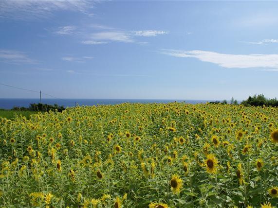 枦山(はぜやま)-西山台地:写真3